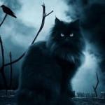 The Cats of the Zodiac: Libra, Scorpio, Sagittarius, Capricorn, Aquarius and Pisces